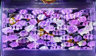 パチンコ ドラム海物語 イルミ魚群